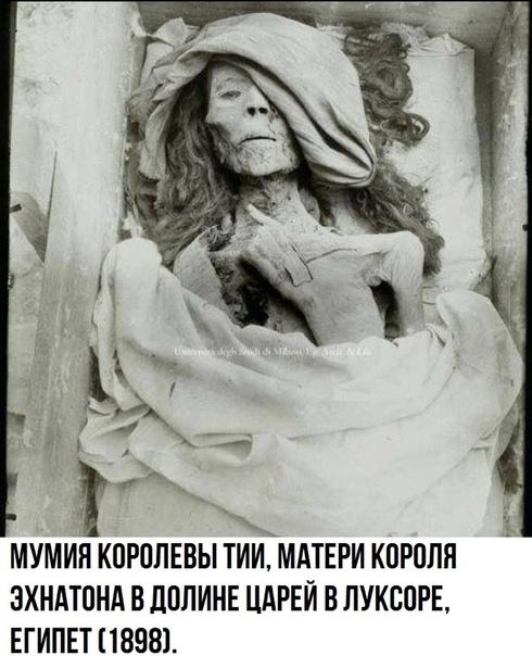 Мумия королевы Тии.