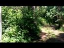 Алтай, р. Катунь. прогулка 17