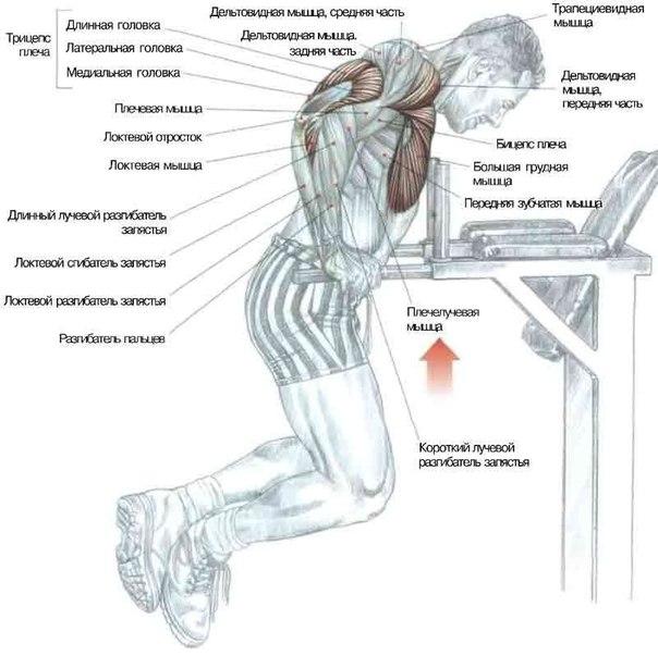 для прокачки грудных мышц.
