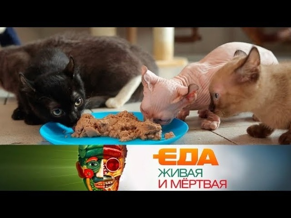 Еда живая и мёртвая: из чего делают корм для питомцев и какие продукты вызывают рак (26.05.2018)