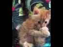 Lol funny весёлые hilarious Юмор Видео Video animals cats Dogs