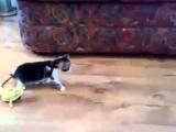 Котенок и 2 игуаны. Ржач =)
