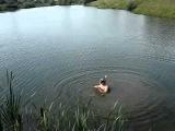 ловлю рыбу руками под водой_xvid.avi