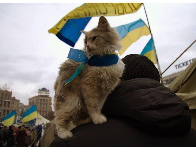 Фотофакт: євромайданний кіт)