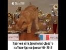 Прогноз кота Донателло-Дорато на финал ЧМ