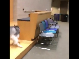Playing hide and seek during lecture.