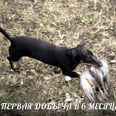 Антон Чёрный, 19 января 1985, Невинномысск, id30907168