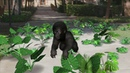 Gorillas! an Augmented Reality game by The Ellen Fund
