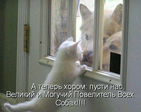 http://cs7055.vk.me/c7001/v7001345/10f94/XAlURiZb8Vg.jpg