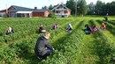 В Крыму треть детских лагерей еще не открылись, остальные смогли продать лишь 30% путевок на первую смену - Цензор.НЕТ 5963