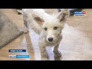 Новосибирцы всем миром спасли угодившего в гудрон щенка (1)