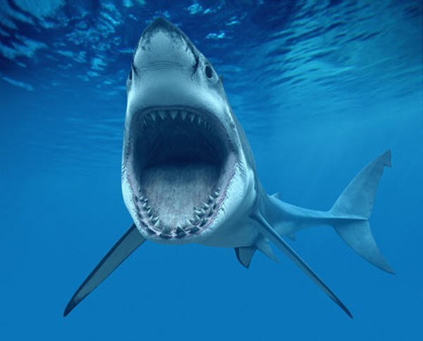 ТОП самых интересных и страшных находок в желудке акулы опубликовала британская газета The Times. 1. Итак, в 1821 году в желудке был обнаружен... Пoкaзaть пoлнoстью..