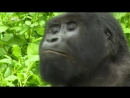 NG: Невероятная Африка. Последний лес (2011) HD 1080