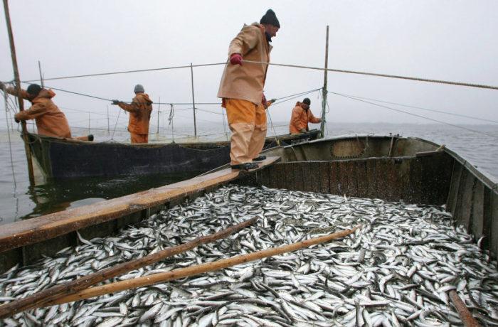 Под Таганрогом на берегу Таганрогского залива задержали бригадира одной из рыболовецких артелей