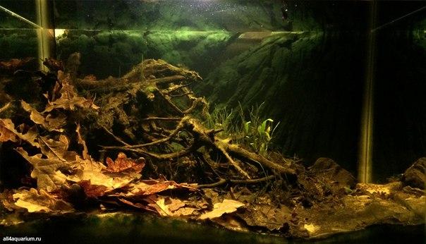 Конкурс дизайна биотопных аквариумов JBL 2014 HId2iYaGMPY