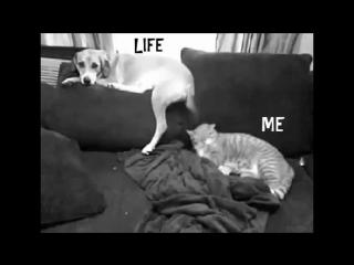 Я и моя жизнь