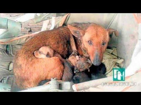 Бездомная собака всю ночь согревала младенца выброшенного на улицу