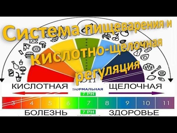 2 Система пищеварения и кислотно щелочная регуляция Адекватное питание 2019 Замалеева Г А