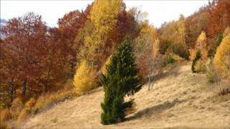 золота осінь Карпат