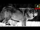 [v-s.mobi]Волчья преданность (стихотворение).mp4