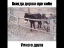 умная коза