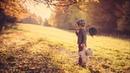 Sad Puppy - We Were Young (Radio Edit)