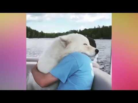 Милые животные - Эти обнимашки поднимут Вам настроение на весь день