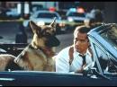К-9: Собачья работа / K-9 (1989) BDRip 720p [Feokino]