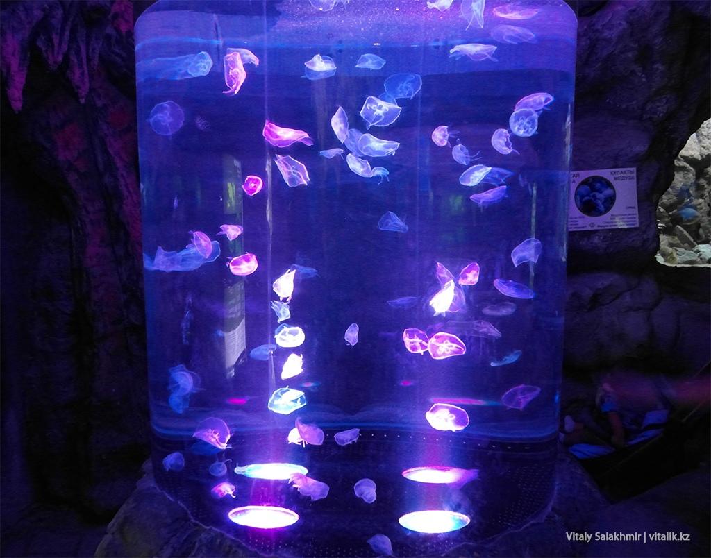 Медузы в аквариуме, зоопарк Алматы 2018