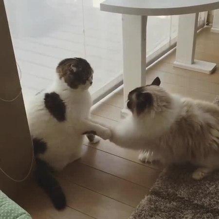 Mortal CatFight