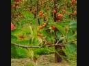 Яблоневый сад🍎🍎🍎
