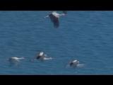 Игорь Буторин - Птицы улетают