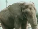 Боба и слон 1972 год
