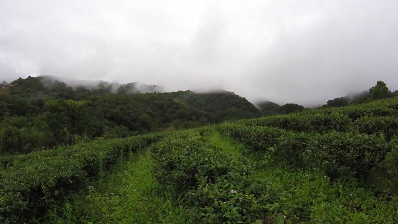 Гора Пять Пальцев Хайнань чайная плантация