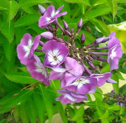 Цветы у Ликки 6fIiXmuZapU