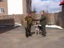 Обучение по курсу Собака-телохранитель выработка адекватной реакции Тайга