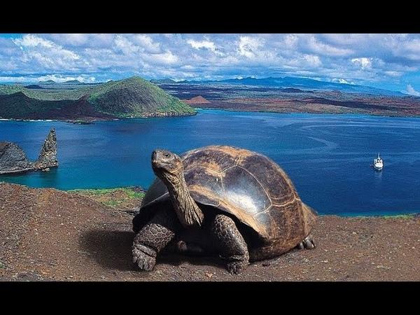 Острова Галапагос Документальный National Geographic