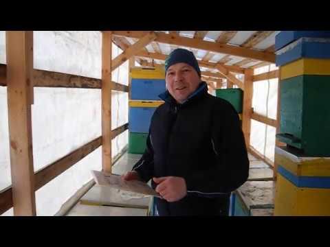 Осмотр пчел в январе и подкормка канди от LYSON