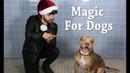 Магия для собак питбули! Magic for Animal Shelter Dogs TBS