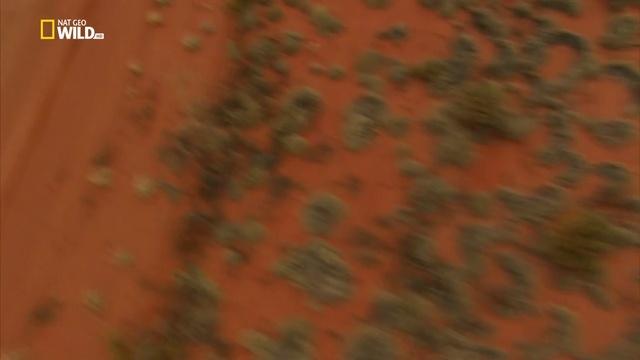 Дикая Австралия с Рэем Мирсом 6 серия. Пустыня / Wild Australia with Ray Mears (2016)