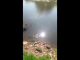 Пение птиц у реки.mp4