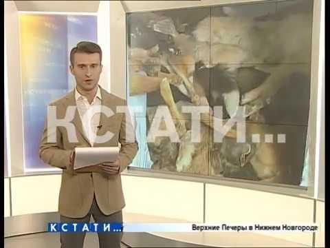 Обвиняемый по делу о собачьем «концлагере» не явился в суд