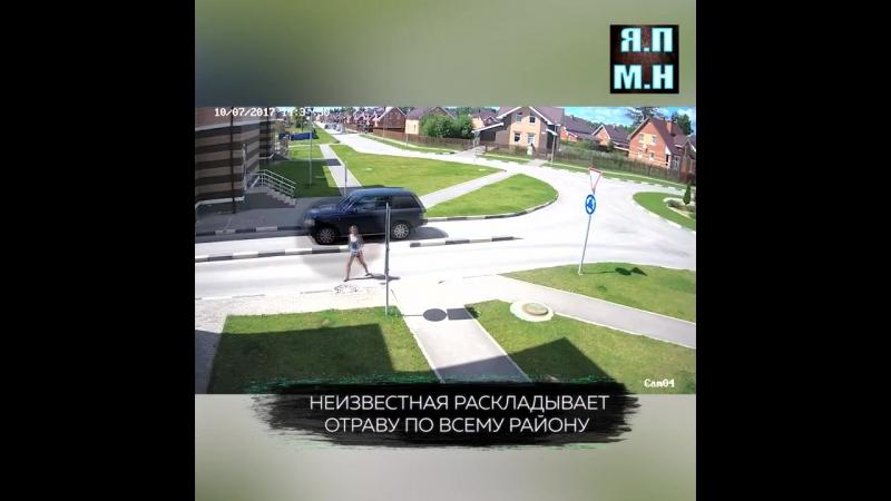 В Обнинске по видео ищут девушку, которая травит в городе собак