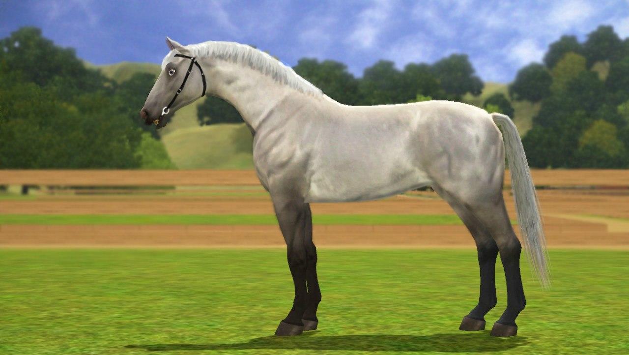 Заявки на удаление лошади из списка - Страница 2 Q-aDWWc_gRo