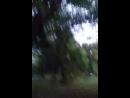 коржик на дереве хаха