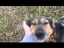 Приветственное видео от колбасяк троевлодке_арчи троевлодке_плюша