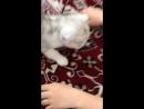 Кися котёнок кошка