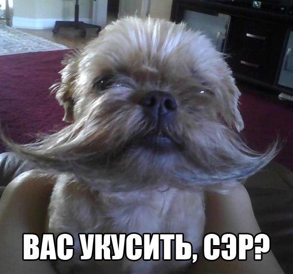 http://cs619119.vk.me/v619119684/1024f/qde6OeLpDho.jpg