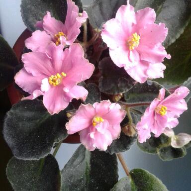 Цветы у Ликки ImS8FlPJMAw
