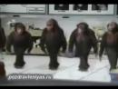 Прикольное поздравление от танцующих обезьян. Смешно!.mp4